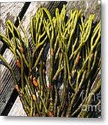Green Fleece Seaweed Metal Print