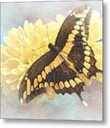 Grunge Giant Swallowtail Metal Print