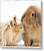 Guinea Pig And Rabbit Metal Print