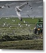 Gull Chased Tractor Metal Print