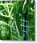 Hanging Cucumbers Metal Print