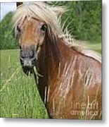 Head Of Chestnut Icelandic Horse Metal Print