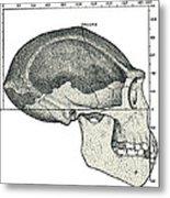 Homo Erectus Skull Metal Print
