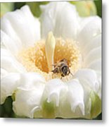 Honey Bee In Cactus Metal Print