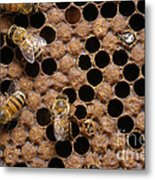 Honey Bees Metal Print