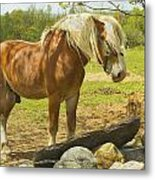 Horse Near Strone Wall In Field Spring Maine Metal Print