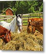 Horses At The Ranch Metal Print