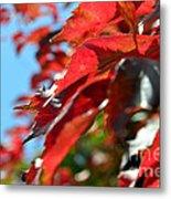 Hot Autumn Leaves Metal Print