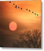 Hot Summer Flight Metal Print by Tom York Images