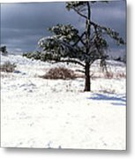 Iced Tree Shenandoah National Park Metal Print