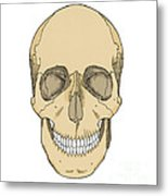 Illustration Of Anterior Skull Metal Print
