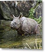 Indian Rhinoceros Rhinoceros Unicornis Metal Print