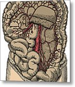 Inferior Mesenteric Artery And The Aorta Metal Print