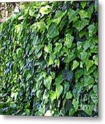 Ivy Wall Metal Print