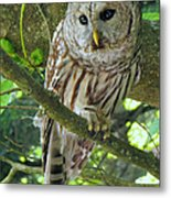 Keeping An Eye Out Metal Print