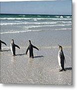 King Penguin Aptenodytes Patagonicus Metal Print