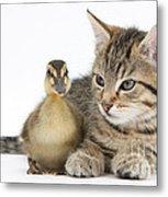 Kitten And Duckling Metal Print