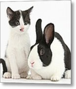 Kitten And Dutch Rabbit Metal Print