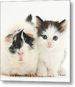 Kitten And Guinea Pig Metal Print