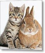 Kitten And Netherland Dwarf-cross Rabbit Metal Print
