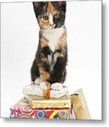 Kitten On Packages Metal Print