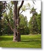 Knurled Tree Metal Print