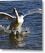 Lake Logan Landing Metal Print