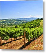 Landscape With Vineyard Metal Print