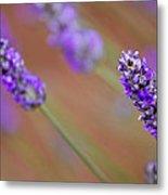Lavender Portrait Metal Print