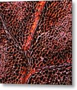 Leaf Anatomy, Light Micrograph Metal Print by Dr Keith Wheeler