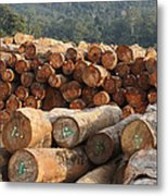 Logged Timber From The Tropical Metal Print