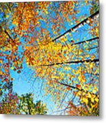 Looking Up At All The Colors Metal Print