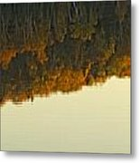 Loon In Opeongo Lake With Reflection Metal Print by Robert Postma