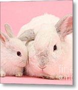 Lop Rabbits Metal Print
