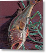 Louie's Catch Metal Print