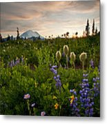 Lupine Sunset Metal Print