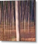 Magical Forest At Sunset Metal Print