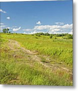 Maine Blueberry Field In Summer Metal Print