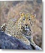 Male Leopard Metal Print
