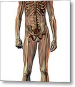 Male Skeleton Metal Print