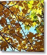Maple Leaf Canopy Metal Print