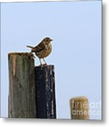Meadow Pipit Metal Print