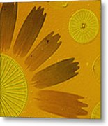 Microscopic Arrangement Metal Print