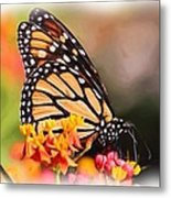 Monarch And Milkweed Metal Print