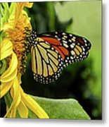 Monarch And The Sunflower Metal Print