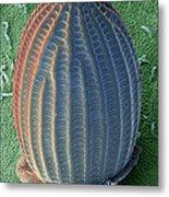 Monarch Butterfly Egg, Sem Metal Print