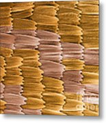 Monarch Butterfly Scales, Sem Metal Print
