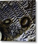 Mournful Owl Butterfly Metal Print