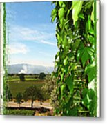 Napa Looking Out Metal Print