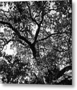 Nature's Network Metal Print